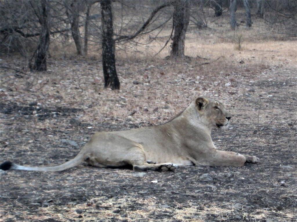 safari1j